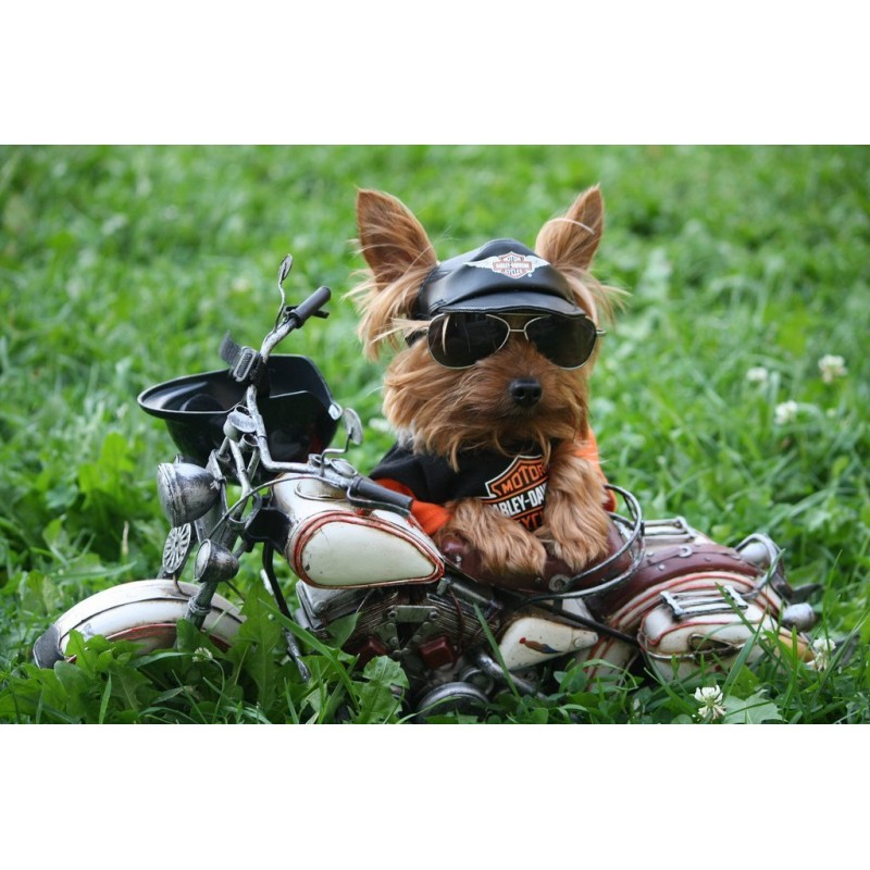 Yorkie Motorized New...