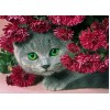 5d Cat Diamond Painting Kit Premium-17